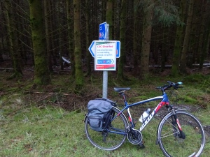 C2C at Whinlatter Forest